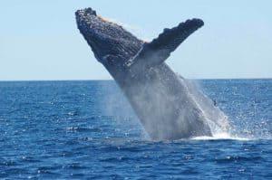 Krillöl Erfahrungen - nicht nur für Wale sehr gesund
